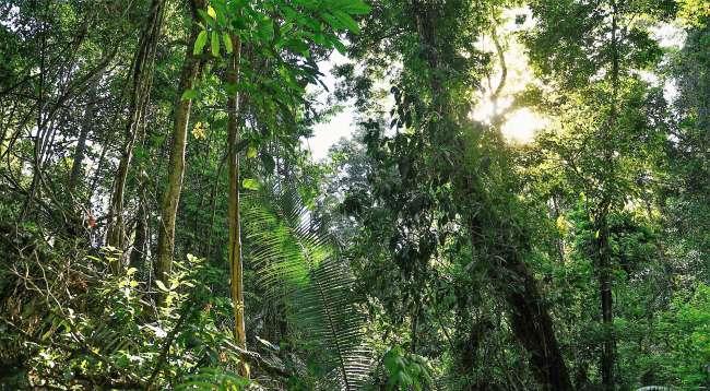 Moyobamba tiene un nuevo Bosque de Protección:  Bosques de Marona, es la primera concesión forestal otorgada a una ronda campesina