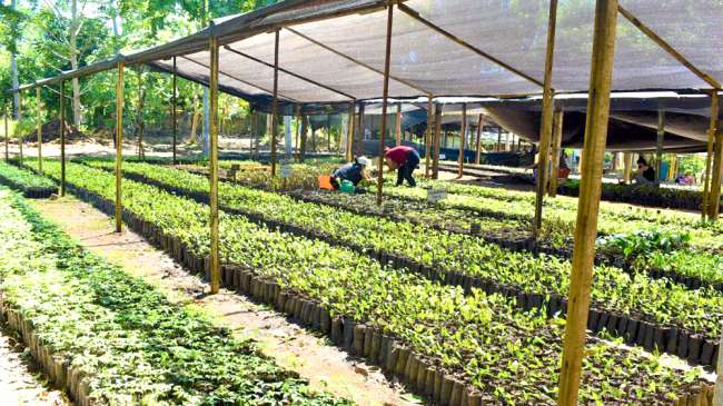 Presentan informe sobre el avance de reforestación en San Martín