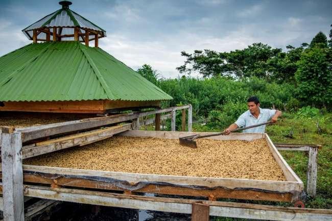Alrededor de 3,000 productores peruanos implementan prácticas en caficultura inteligente