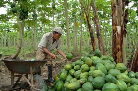 Presentan proyecto que movilizará más de US$ 100 millones para la Amazonía peruana