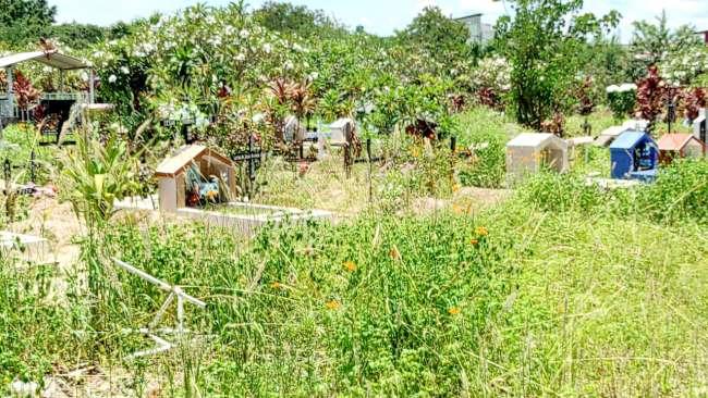Cementerio de la Municipalidad de Morales está en pésimas condiciones