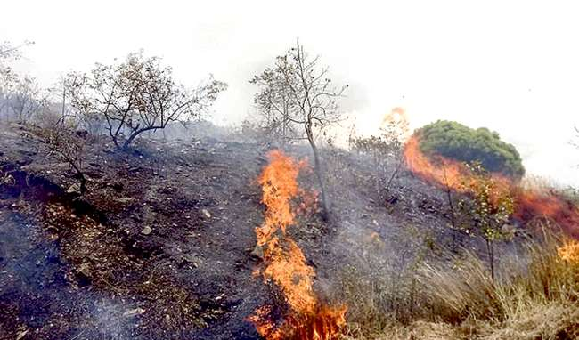 Evitemos la tala indiscriminada de árboles y la quema de pastizales en perjuicio del eficiente suministro eléctrico en la región